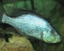 Fs: African Cichlids - last post by AfricaFan