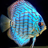 Discus Display Pics - last post by Angelo