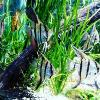 Fs Green Bay Snook And Sailfin Pleco - last post by Voodoo