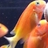 Who Knows Their Cichlids Inside Out? - last post by chrishaigh82