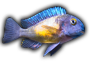 A Few Fish In Stock At Aquotix - last post by Bowdy